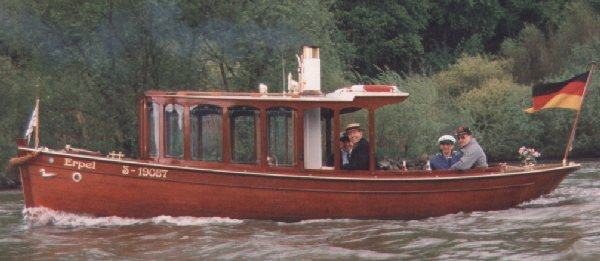 Steamboat Erpel - Picture 2